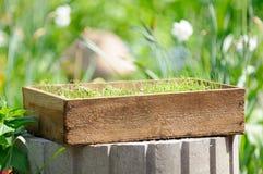 Embalaje de madera con las plantas de semillero en la yarda Fotografía de archivo