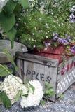 Embalaje de madera de la manzana con verdes Foto de archivo libre de regalías