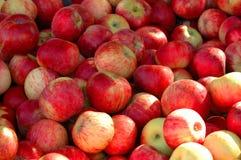 Embalaje de manzanas Fotografía de archivo libre de regalías