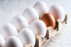 Embale a clara de ovos e um diferente não natural prejudicial do conceito marrom bege o outro racismo Fotografia de Stock Royalty Free