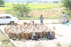Emballage av skördad risfält Fotografering för Bildbyråer
