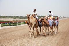 Emballage de chameau photographie stock libre de droits