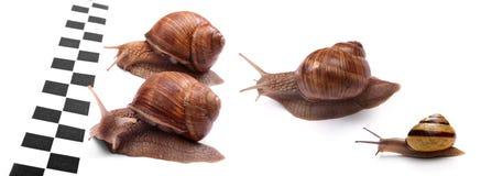 emballage des escargots Photos stock