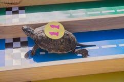 emballage des tortues à l'air frais Nature, repos photo stock