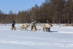 Emballage sur le renne photo libre de droits