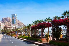 Embankment in Alicante. Avenue Loring Royalty Free Stock Photography