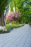 Embankment in cherry blossoms stock photography