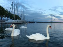 Embankment on Lake Geneva in Lausanne with swans and yacht at ev. Ening time, Switzerland Stock Images