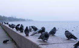Embankment of lake Onega in Petrozavodsk city Stock Photos