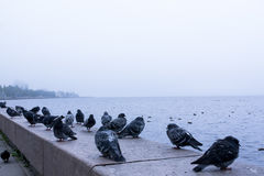 Embankment of lake Onega Stock Images