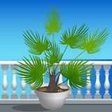 Embankment and a palm tree in a pot Royalty Free Stock Images