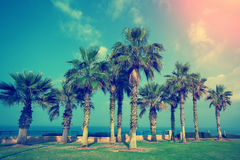 Embankment with palm trees. In Netanya city, Israel Stock Images