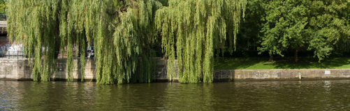 Embankment. Panorama. The embankment of the River Spree. Weeping willow. Berlin Royalty Free Stock Photography