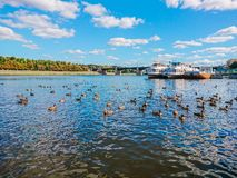 Embankment of the river Volga in Tver, Russia. Autumn Sunny day. Pleasure boats at the pier. Wild Mallard ducks swim in the river Stock Photo