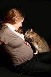 Embarazado con el gato Fotos de archivo