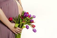 Embarazo Vientre y manos expuestos de una mujer embarazada Apenas llovido encendido Tulipanes fotos de archivo