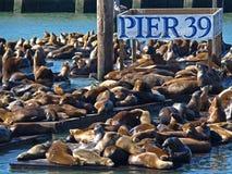 EMBARCADERO 39 y león de mar Foto de archivo libre de regalías