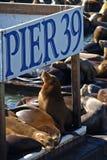 EMBARCADERO 39 y león de mar Fotos de archivo libres de regalías