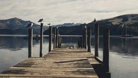 Embarcadero de Akaroa - península de los bancos foto de archivo libre de regalías