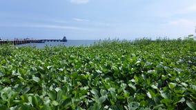 Embarcadero de la pesca de Hua Hin Imagen de archivo libre de regalías