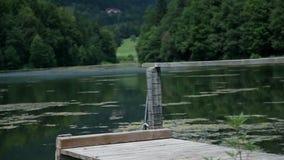 Embarcadero de madera con la cerca en el lago verde