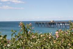 Embarcadero distante enmarcado por las flores salvajes y el océano azul Imágenes de archivo libres de regalías