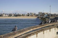 Embarcadero en la playa de Venecia, California Foto de archivo libre de regalías