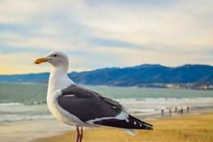 Embarcadero en la puesta del sol, Los Ángeles de Santa Monica de la playa Fotos de archivo libres de regalías