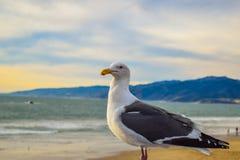 Embarcadero en la puesta del sol, Los Ángeles de Santa Monica de la playa Fotos de archivo