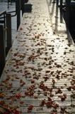 Embarcadero mojado, hojas de la caída, luz del sol de la mañana Imagenes de archivo