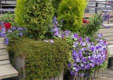 Embarcadero plantar decorativo 55 Seattle, Washington con las flores y las plantas imágenes de archivo libres de regalías