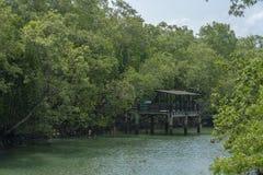 Embarcadero sobre el río tropical fotos de archivo libres de regalías