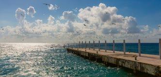 Embarcadero y una multitud de pájaros Fotografía de archivo libre de regalías