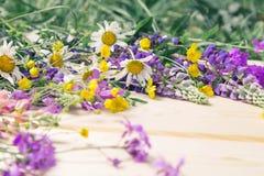 Embarque o fundo para o projeto em um quadro das flores de florescência do verão O lugar para uma inscrição imagem de stock royalty free