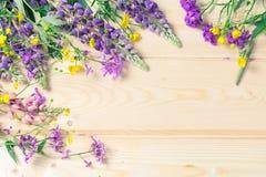 Embarque o fundo para o projeto em um quadro das flores de florescência do verão O lugar para uma inscrição Imagens de Stock Royalty Free