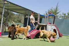 Embarquement d'animal familier Photo stock