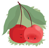 Embarrassment Among Cherries. A cherry cuddle her partner, so the cherries ripen Royalty Free Stock Photo