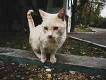 Embellezca el gatito foto de archivo libre de regalías