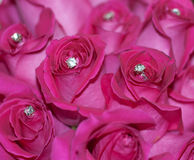 Embellished Roses Royalty Free Stock Photography