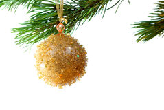 Embellishment cristmas,. Green branches of the pine,embellishment cristmas,white background Stock Photography