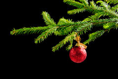 ,embellishment cristmas,. Green branches of the pine,embellishment cristmas Royalty Free Stock Images
