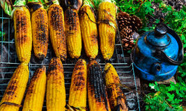 Embers of the fire to cook corn andmake tea.  Royalty Free Stock Photography