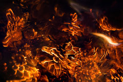 Embers of pine cones romantic fire soft background Stock Photos