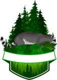 Emblème de région boisée de vecteur avec le raton laveur Image stock