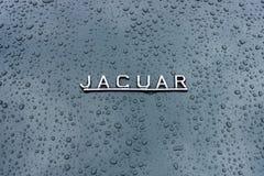Embleem van de sportwagen Jaguar in regendruppels op de donkere achtergrond Stock Fotografie