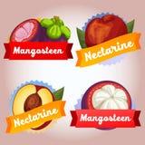Emblem för mangosteen för samlingsfruktnektarin Royaltyfri Bild