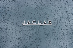 Emblem of the sports car Jaguar in raindrops on the dark background. Stock Photography