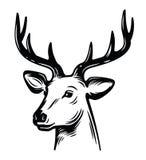 Emblem young deer Royalty Free Stock Photo