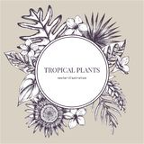 Emblema de papel redondo sobre plantas tropicais Ilustração desenhada mão do vetor ilustração stock
