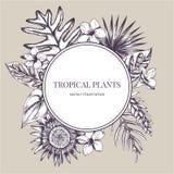 Emblema di carta rotondo sopra le piante tropicali Illustrazione disegnata a mano di vettore illustrazione di stock